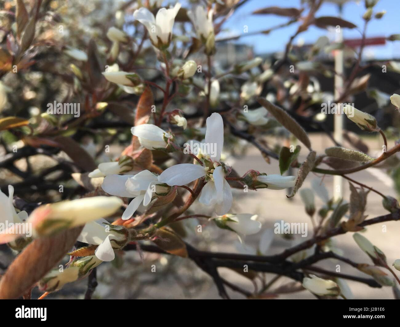 Tree in The spring - Stock Image