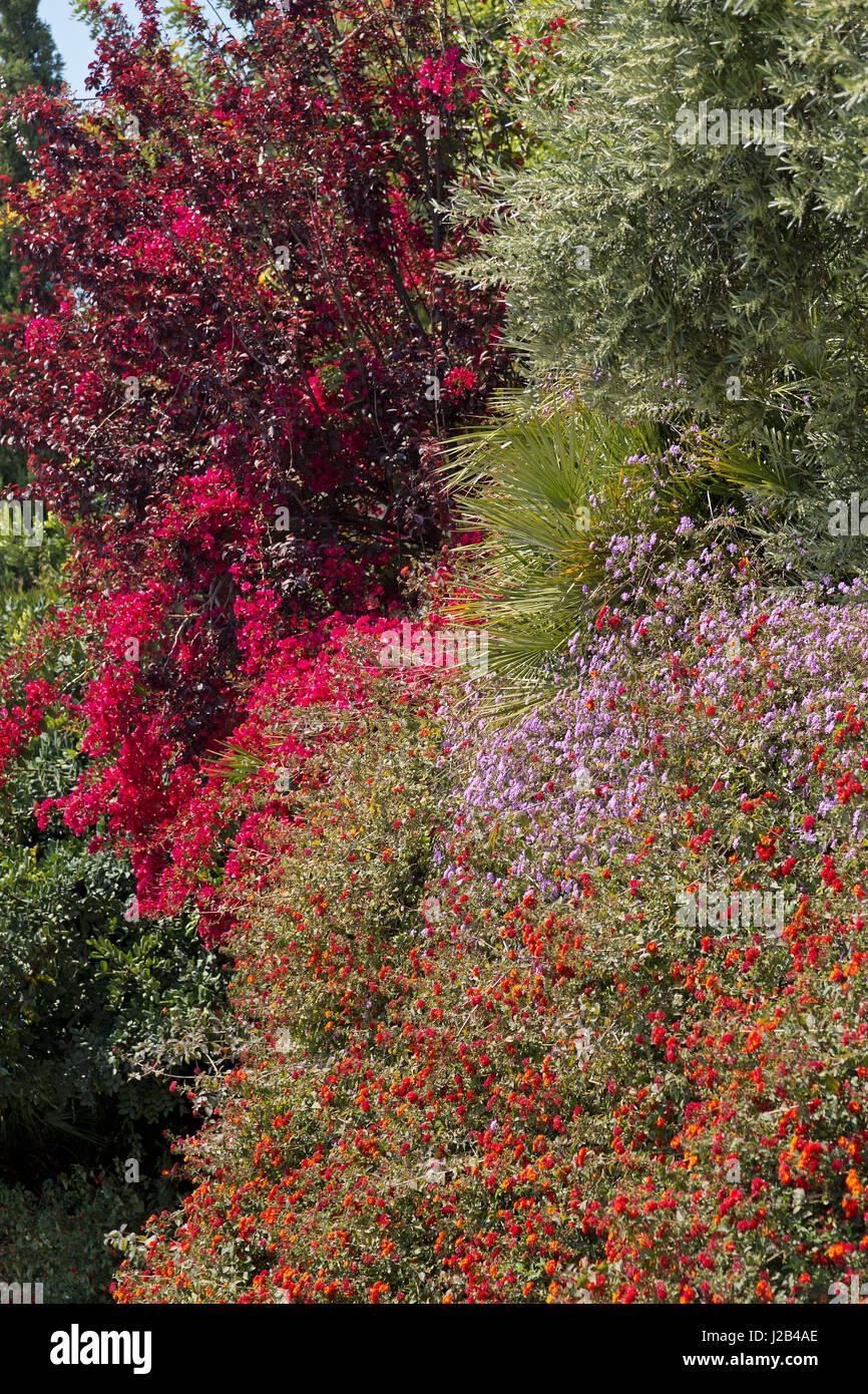 flowers in Palma de Mallorca, Spain - Stock Image