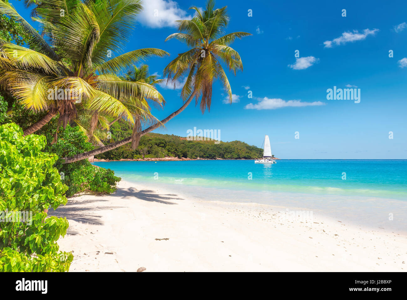 Tropical ocean beach with white sand, coconut palm trees, transparent turquoise water and sailing yacht in bright - Stock Image