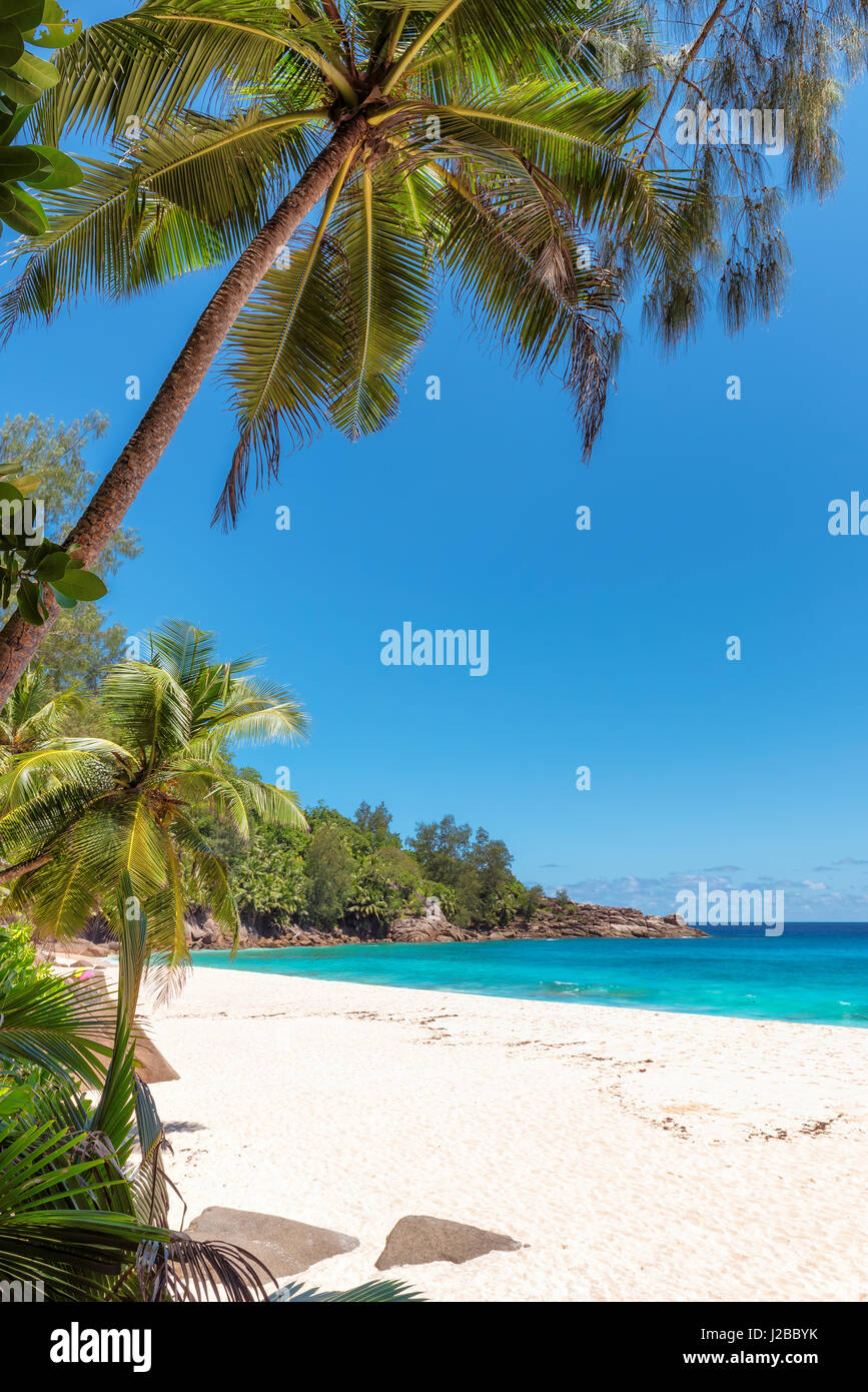 Paradise tropical ocean beach with white sand, transparent turquoise water and coconut palm tree in bright sunny - Stock Image