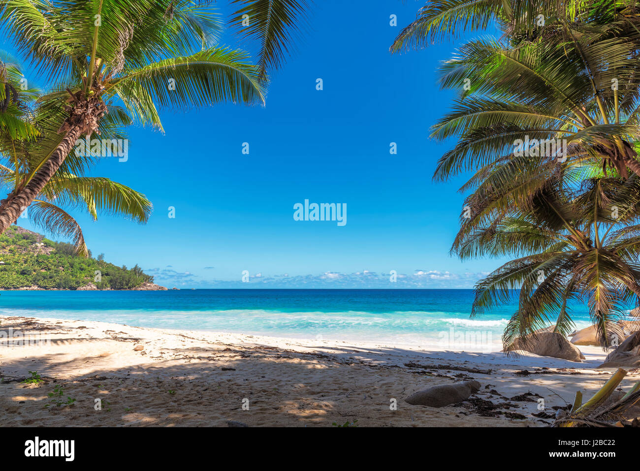 Tropical ocean beach with white sand, transparent turquoise water and coconut palm tree in bright sunny day. - Stock Image