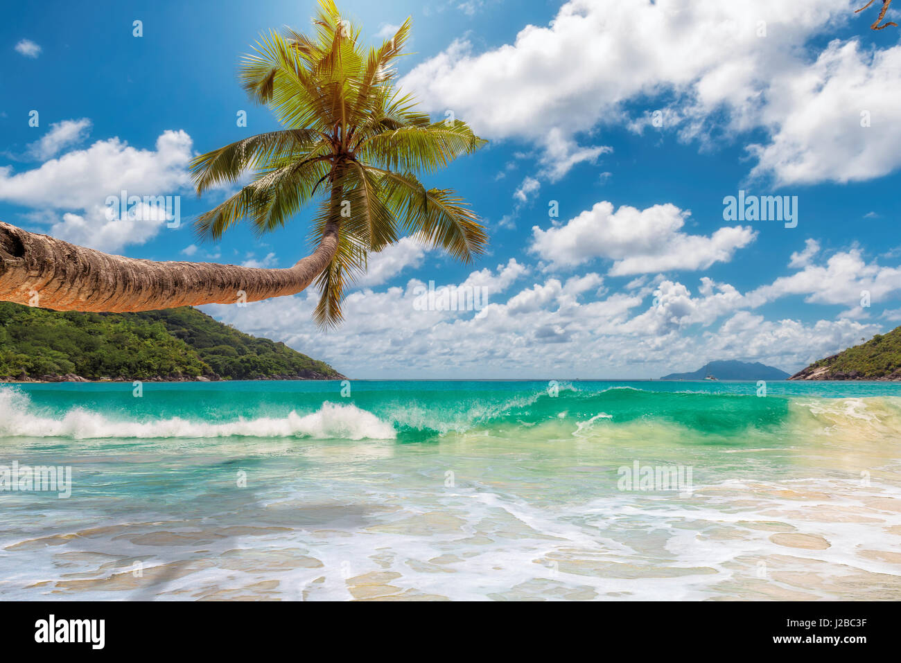 Tropical ocean beach with coconut palm tree in bright sunny day. - Stock Image