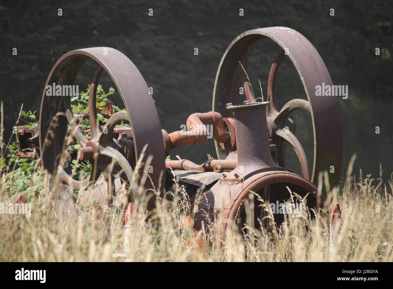 Final resting place of old steam engine in field of corn in Chile - Stock Image