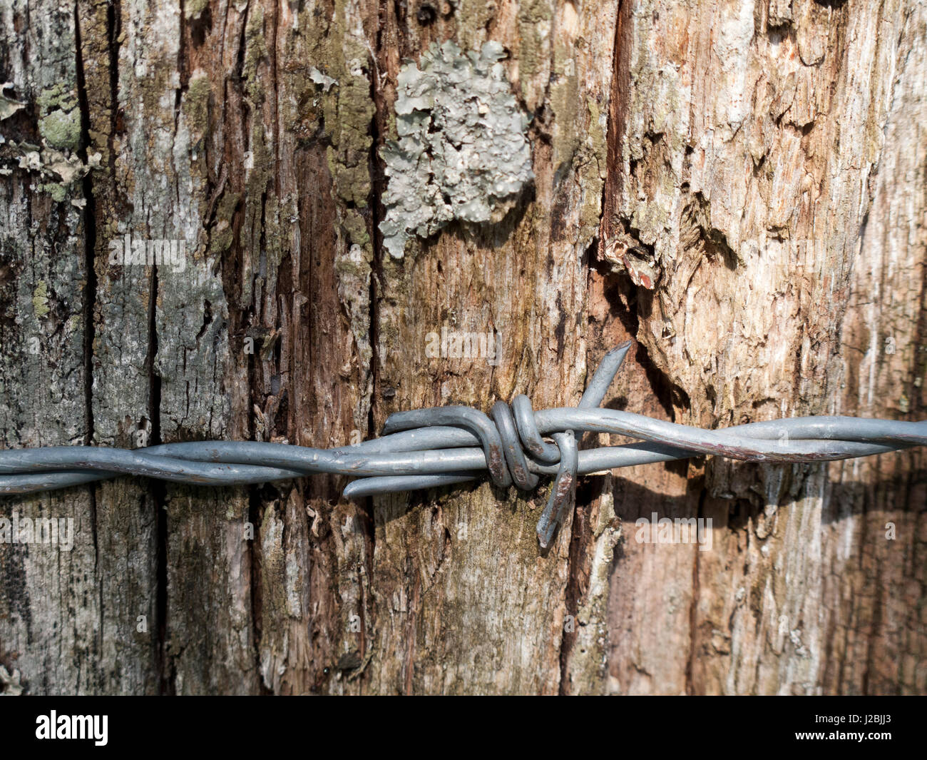 Wooden Fence Post Twisted Barbed Stock Photos & Wooden Fence Post ...