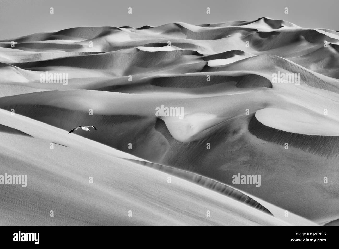Sandwich Harbor, Namibia. Gull flies over immense sand dunes. - Stock Image