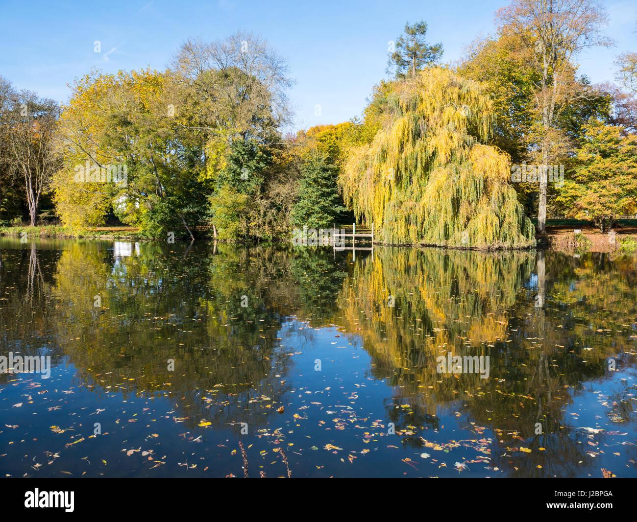 Riverside Tree Reflections, Pangbourne-on Thames, Reading, Berkshire, England, UK, GB. Stock Photo
