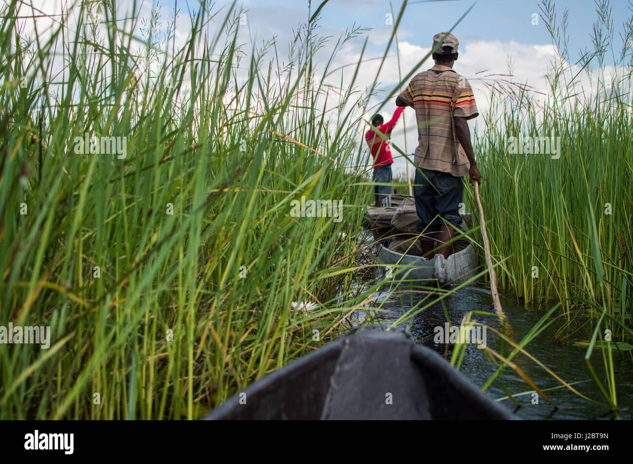 Mokoro Canoe Trip in the Okavango Delta near Maun, Botswana - Stock Image