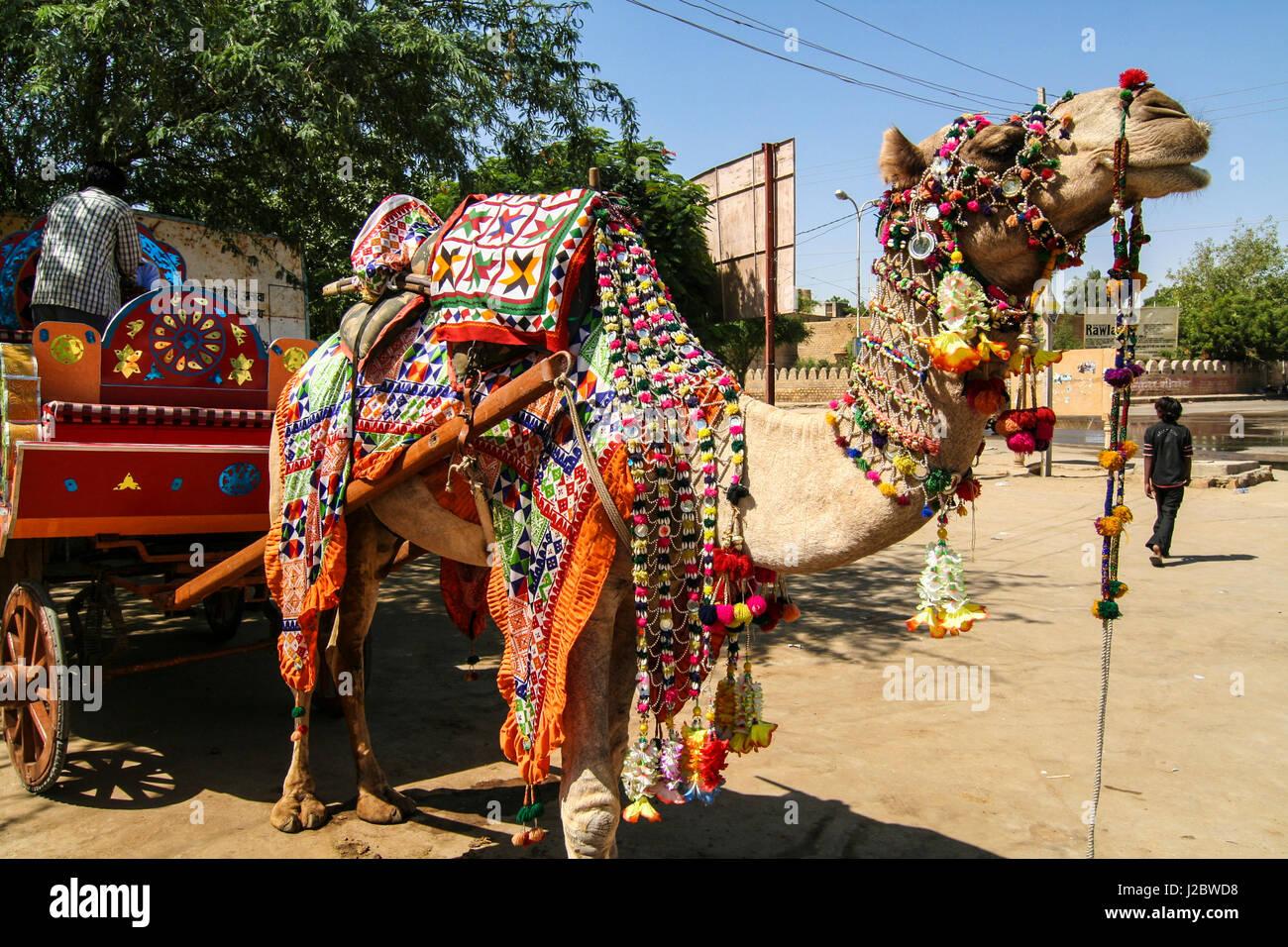 Jaisalmer, Rajasthan, India. Decorated camel - Stock Image