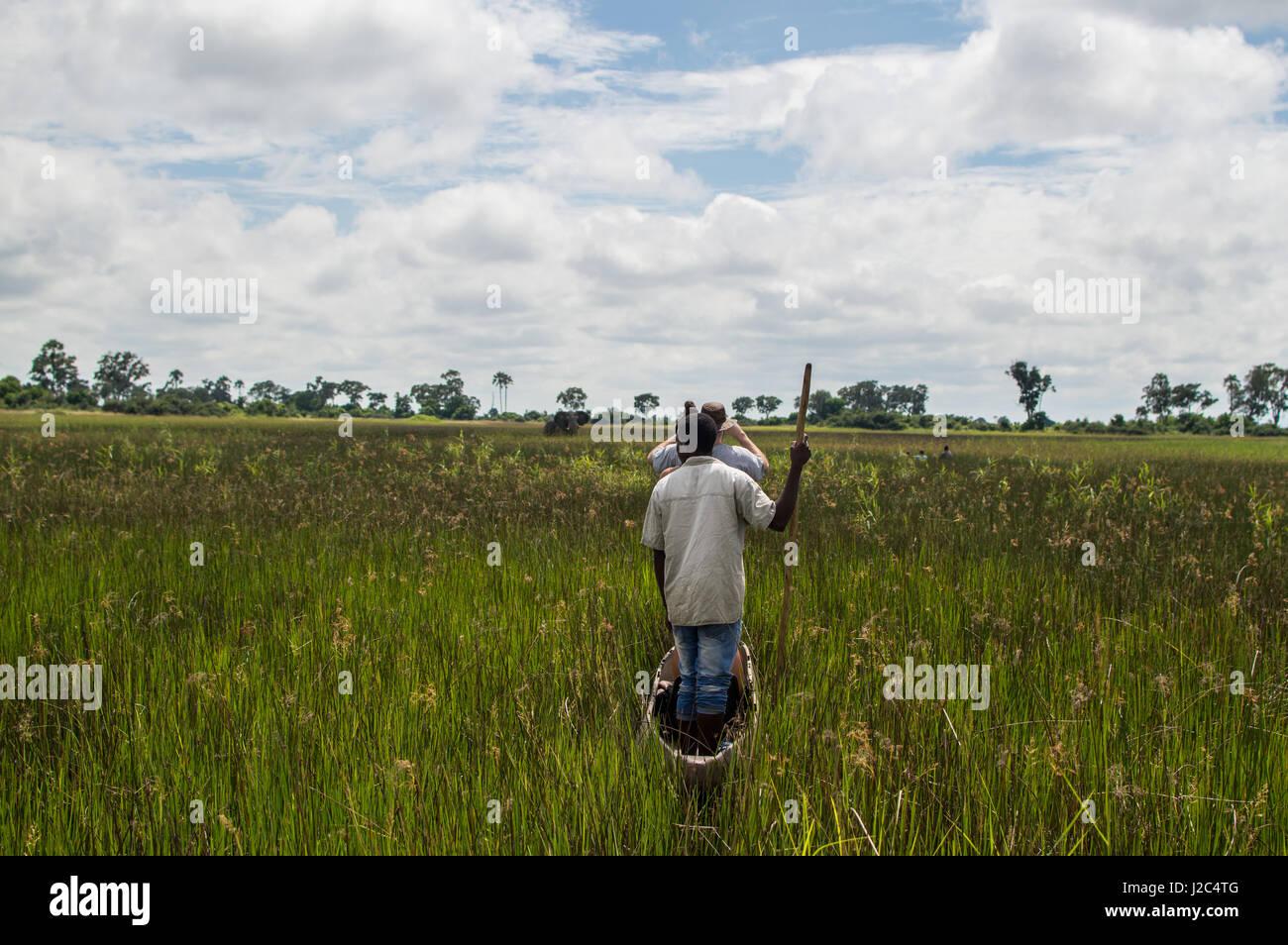 Encountering a Wild Elephant during a Mokoro Canoe Trip in the Okavango Delta near Maun, Botswana - Stock Image