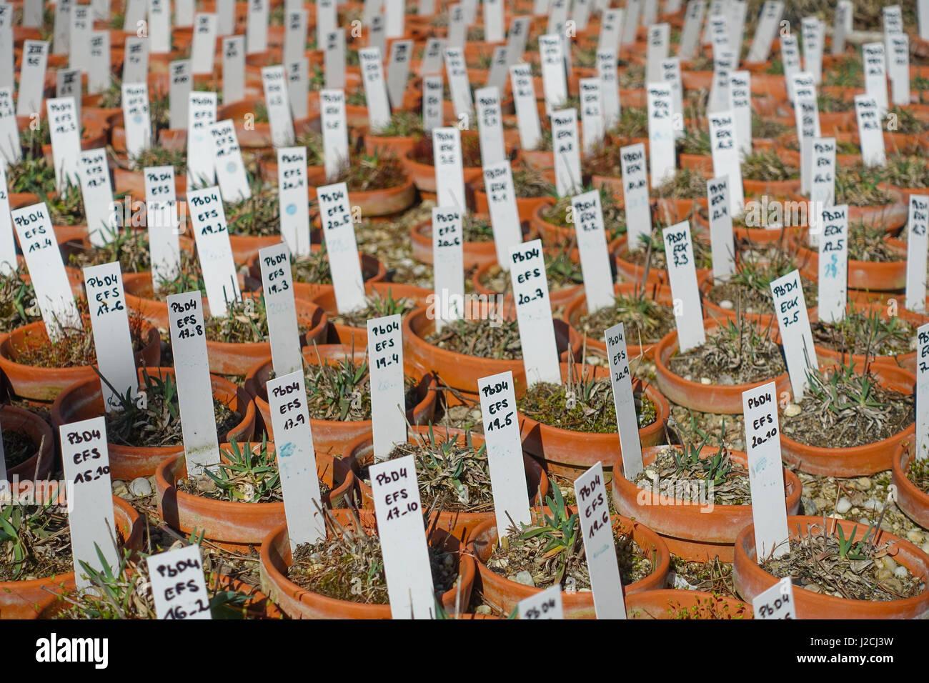 Wien, Universität für Bodenkultur (Boku) - Stock Image