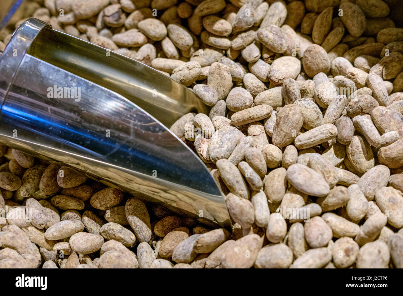 Cocoa Beans-Theobroma cacao Stock Photo