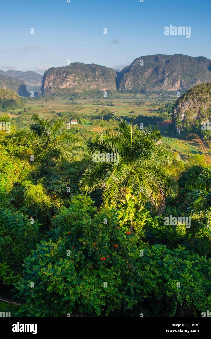Cuba. Pinar del Rio. Vinales. The Vinales valley in the early morning. - Stock Image