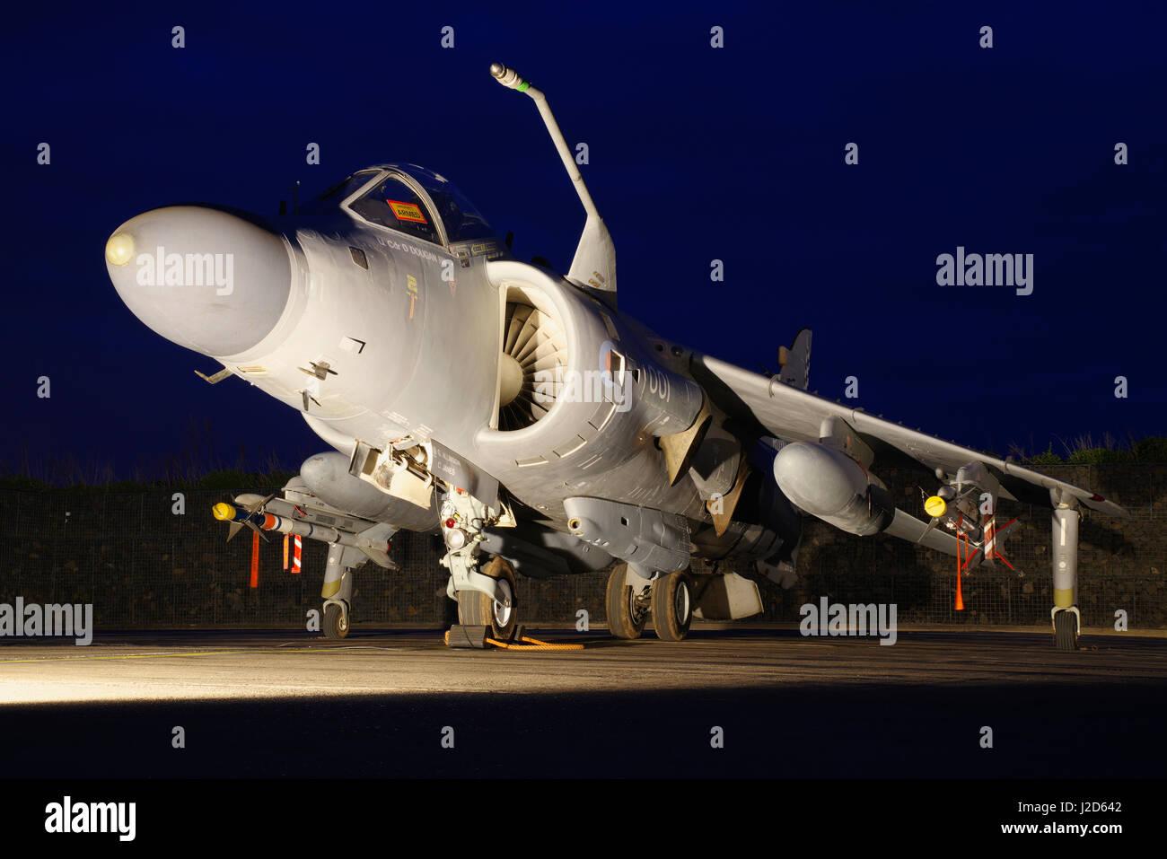 Harrier - Stock Image