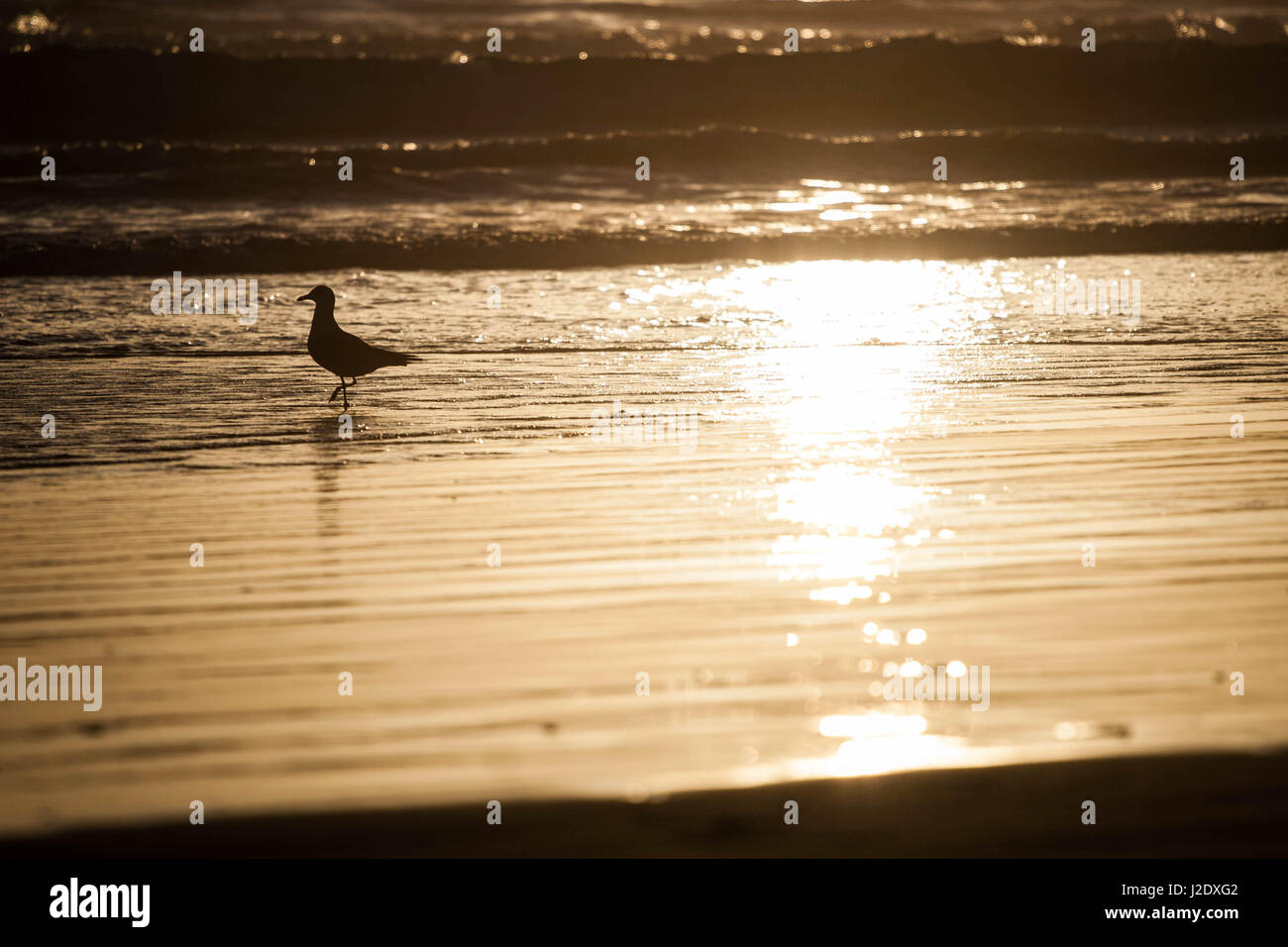 Seagull0090   - Stock Image