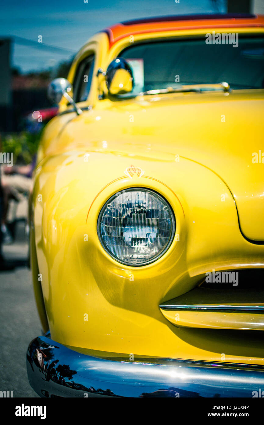 YellowJacket0552   - Stock Image