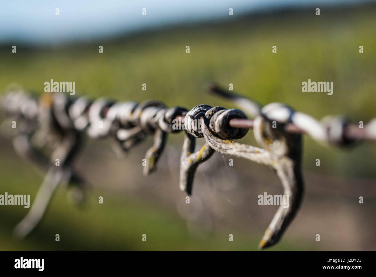 VineWire2536   - Stock Image