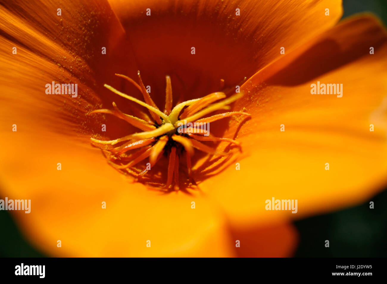 InThePoppy   - Stock Image