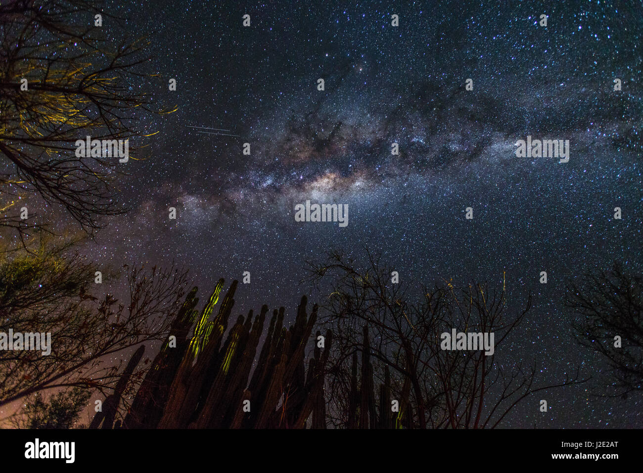 Bright Milky Way over cactus and shrubs in the Namibian desert - Stars, satellites in our galaxy - Stock Image