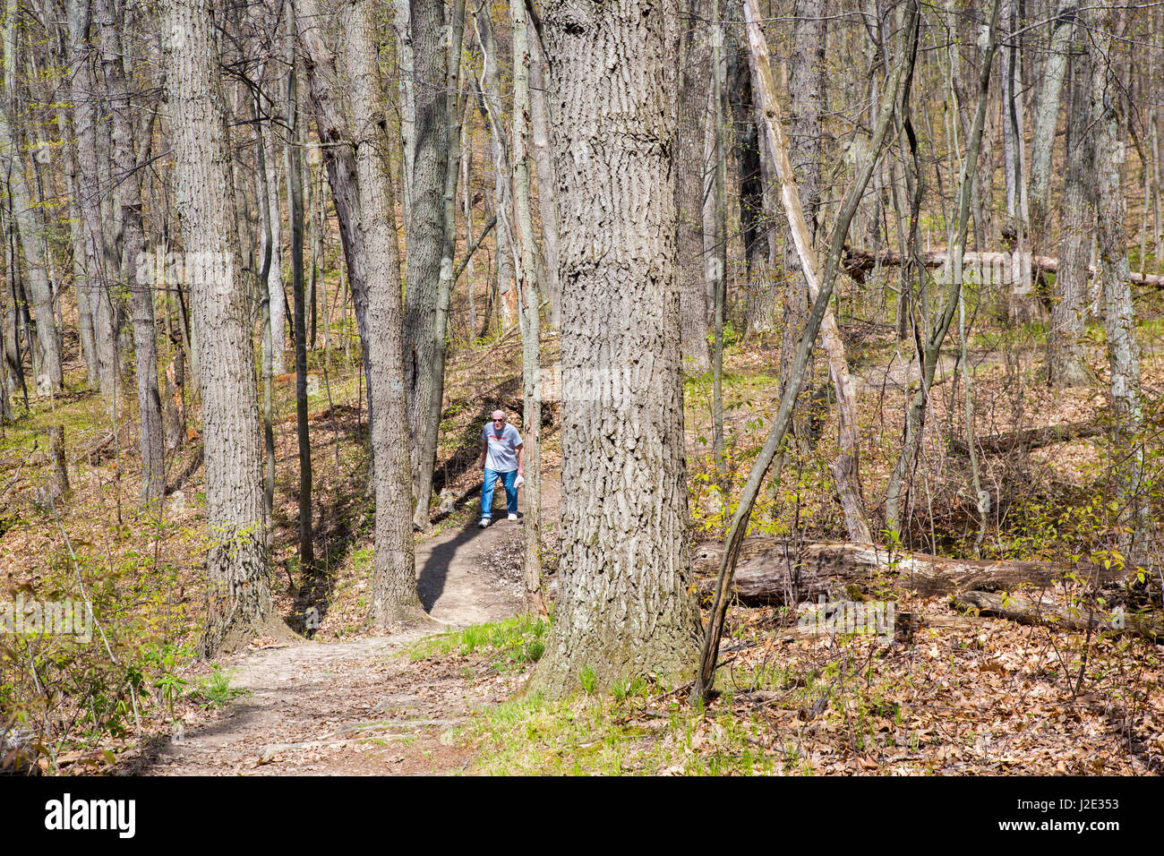 Holly, Michigan - A senior citizen hiking in Seven Lakes State Park on a warm spring day. - Stock Image
