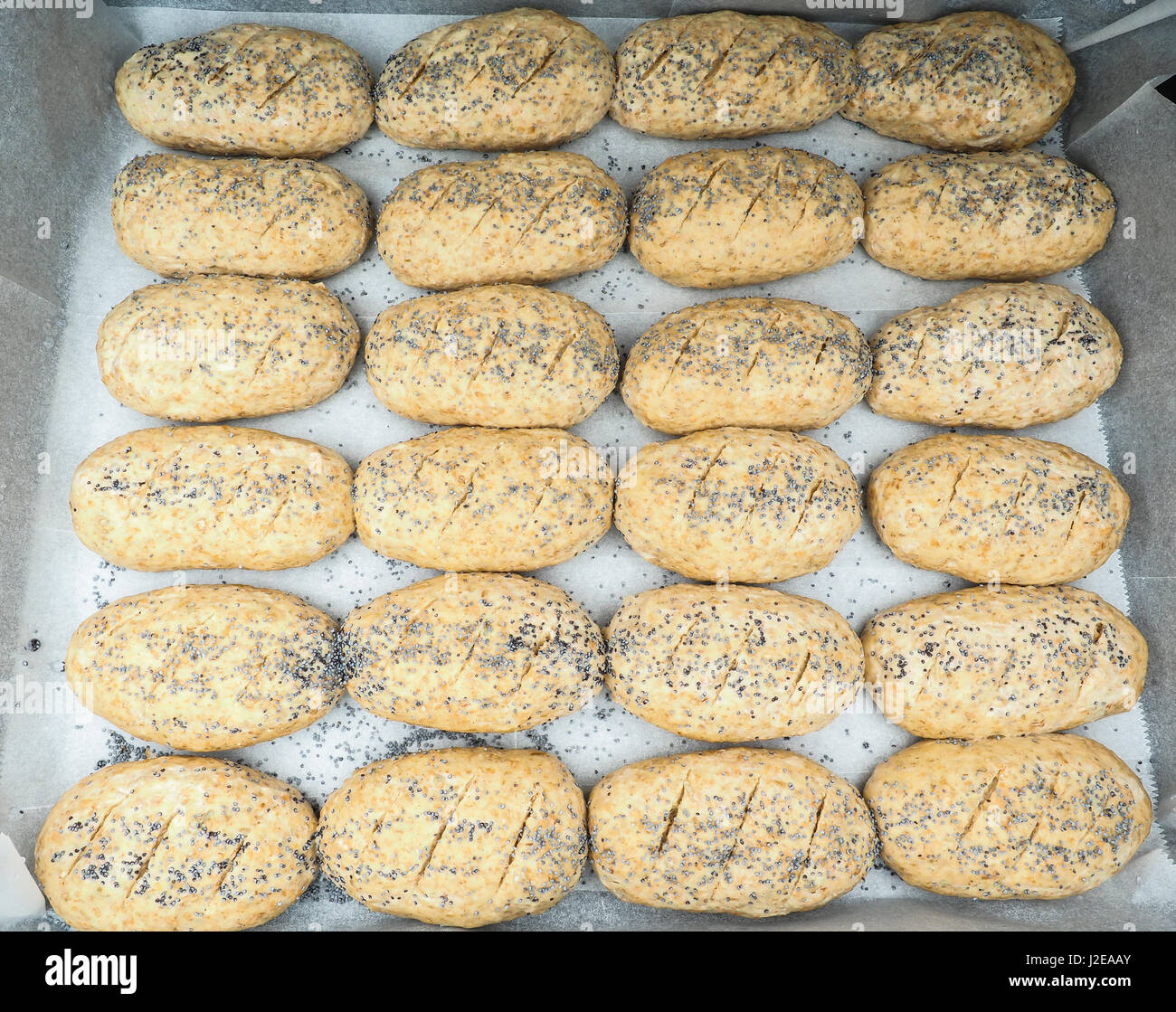 Group of plated whole grain rolls with poppy seeds unbaked on baking paper - Stock Image