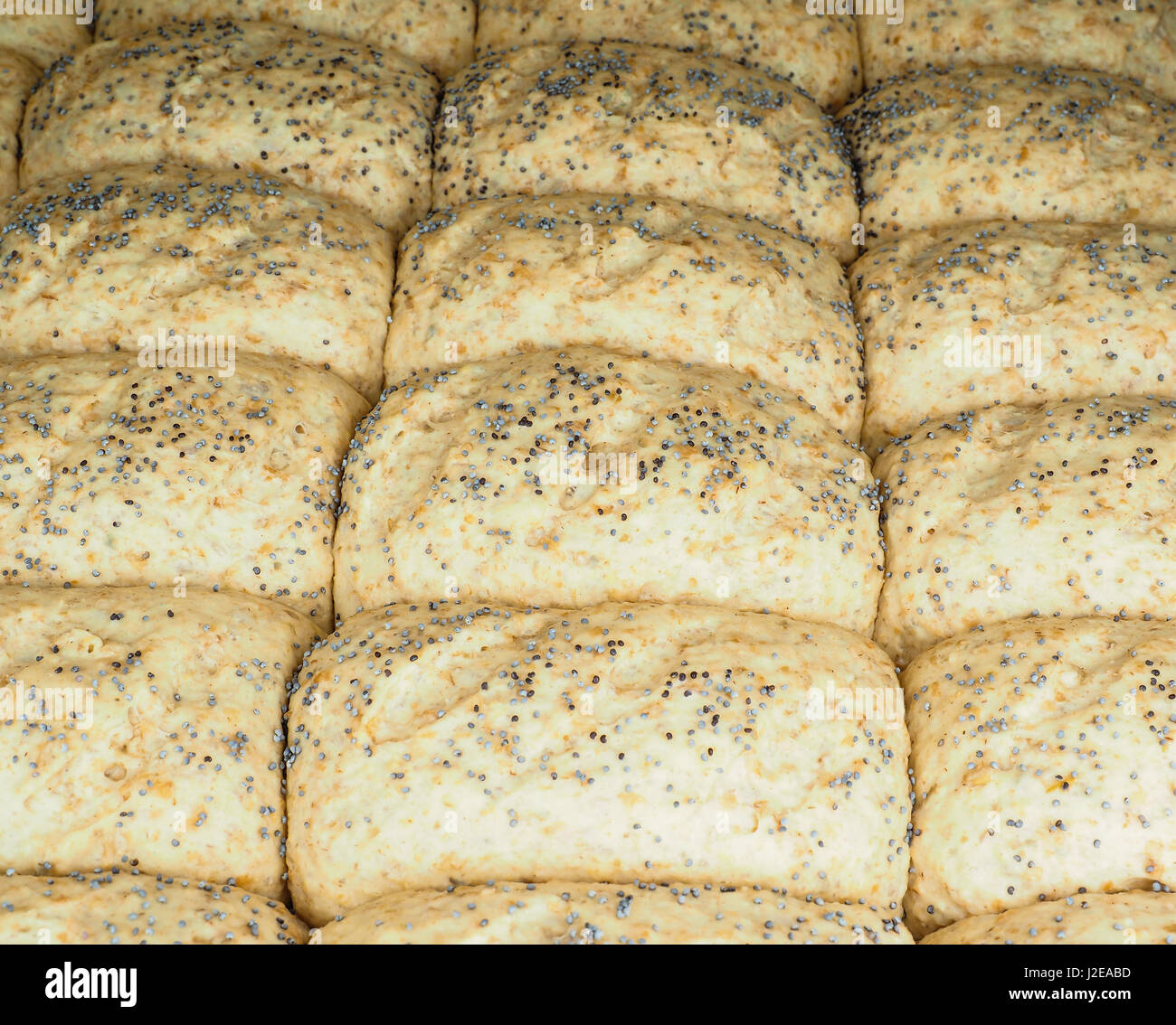Closeup of proofed unbaked rolls with poppy seeds - Stock Image