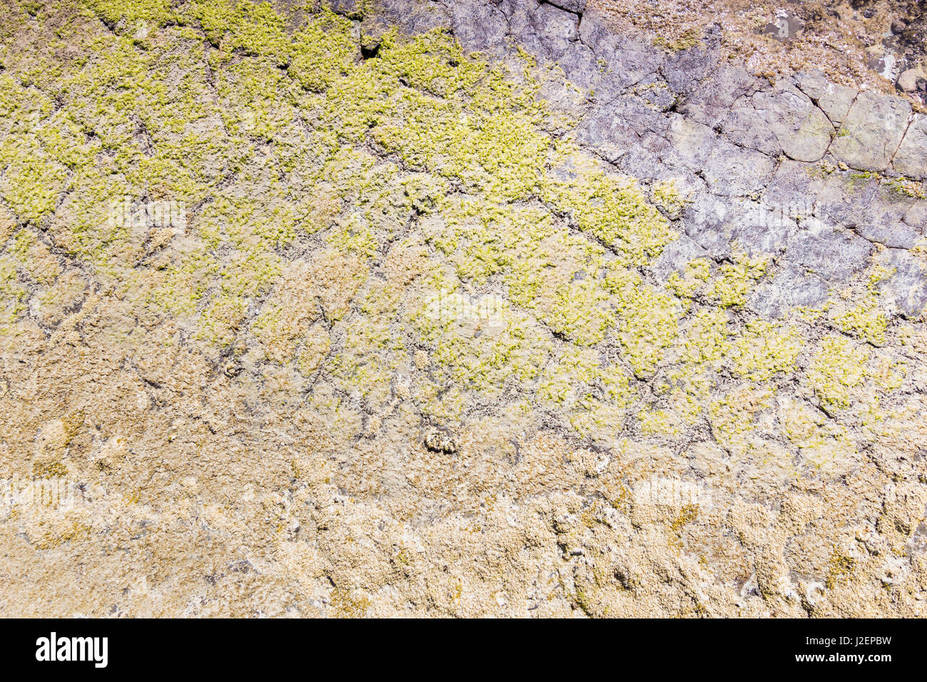 Natural stone texture, moss covered. Stock Photo