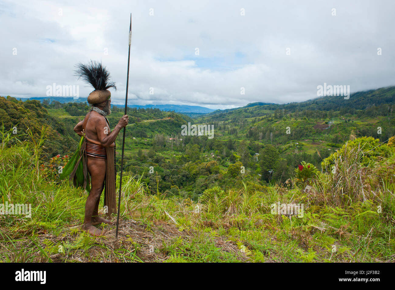 Colorfully dressed local tribal chief in the Highlands of Papua New Guinea, Melanesia - Stock Image