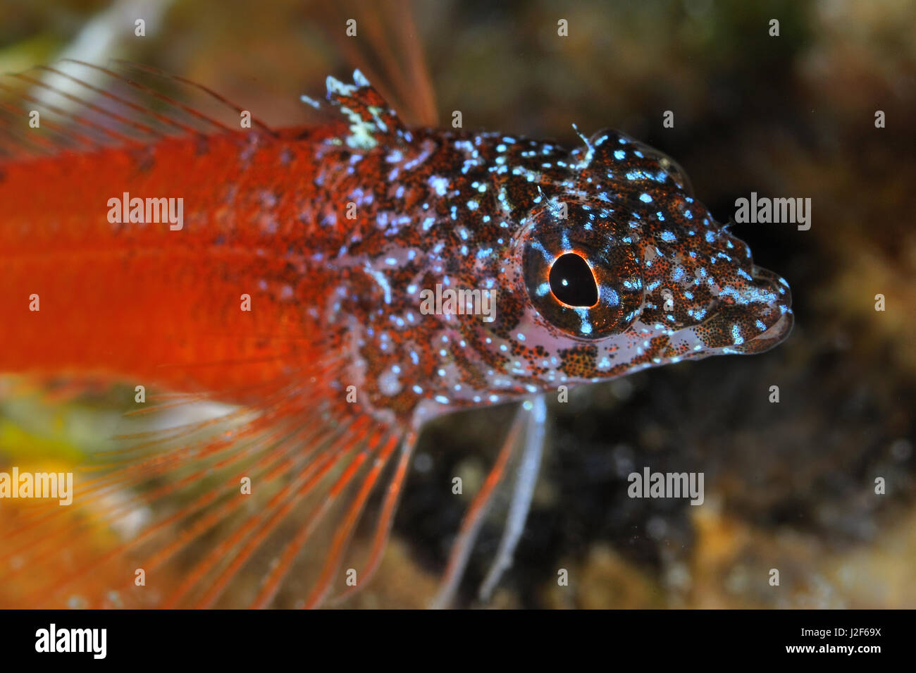 Colored Fish Of Mediterranean Sea Stock Photos & Colored Fish Of ...