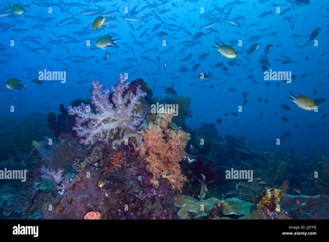 Seascape image of a colorful coral reef, remote and pristine in the heart of the coral triangle. Raja Ampat, Indonesia. Stock Photo