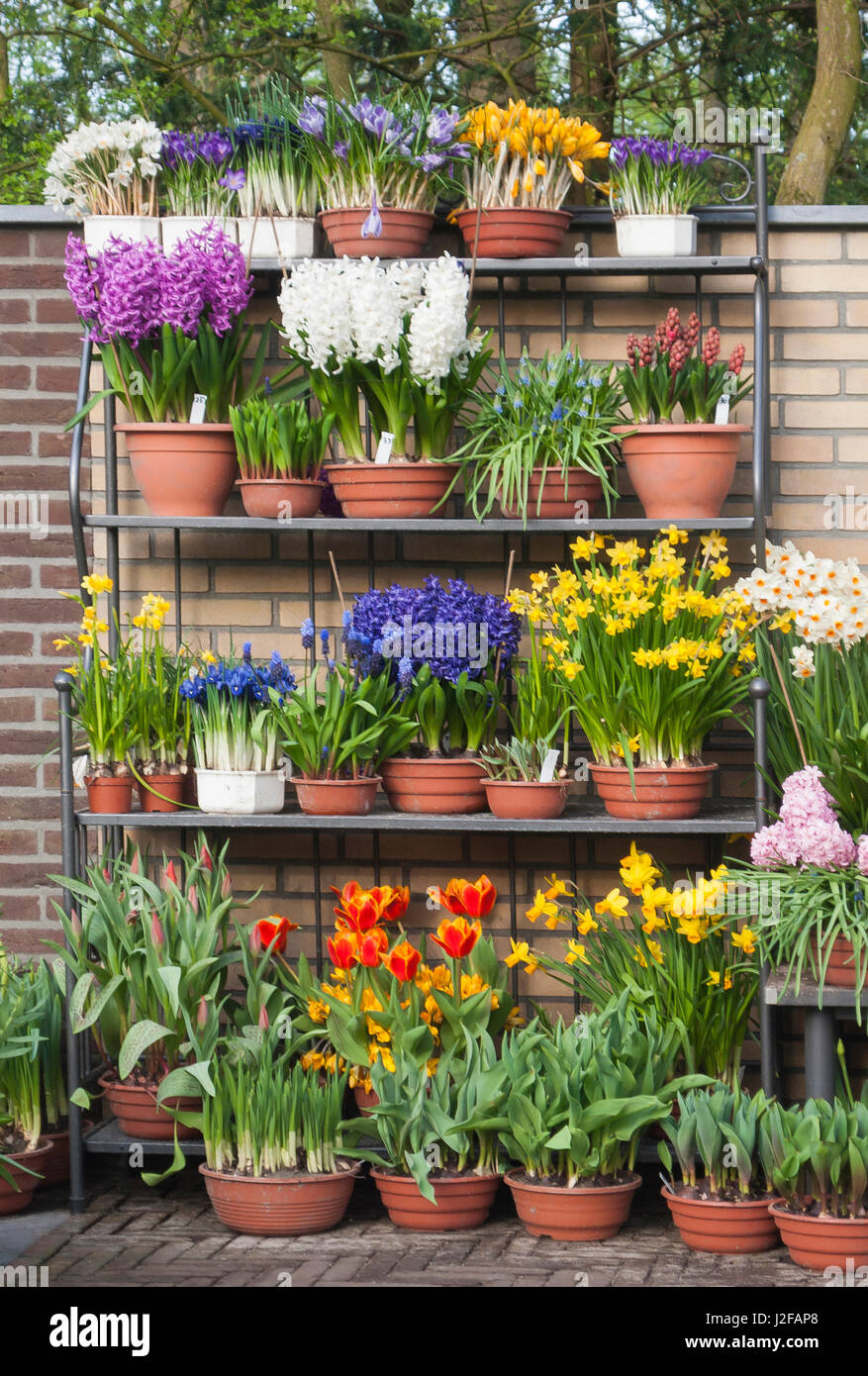 Potted Spring Flowers On Garden Bench Stock Photo 139250000 Alamy
