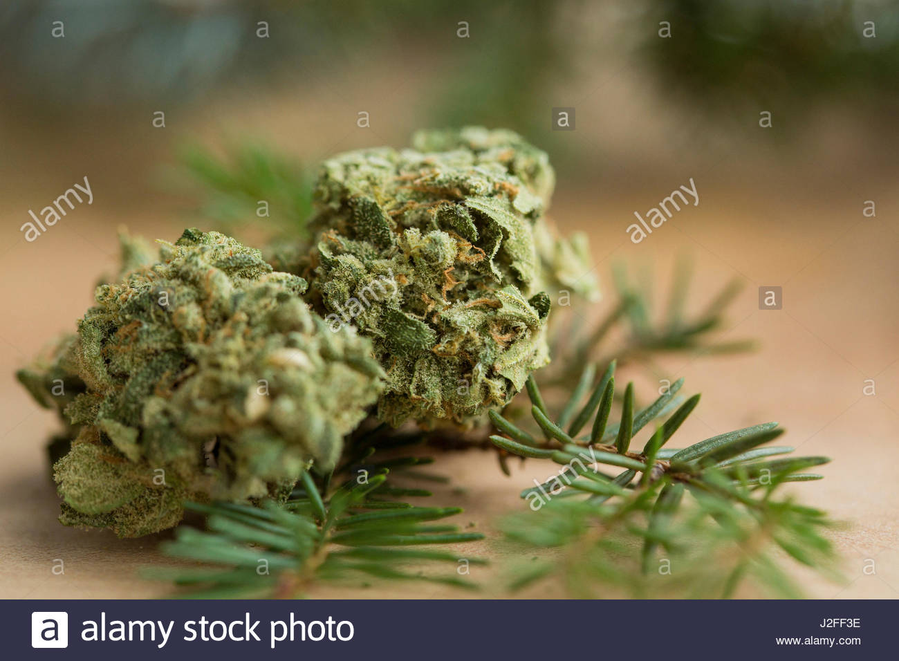 Table top with the Jack Herer strain. - Stock Image