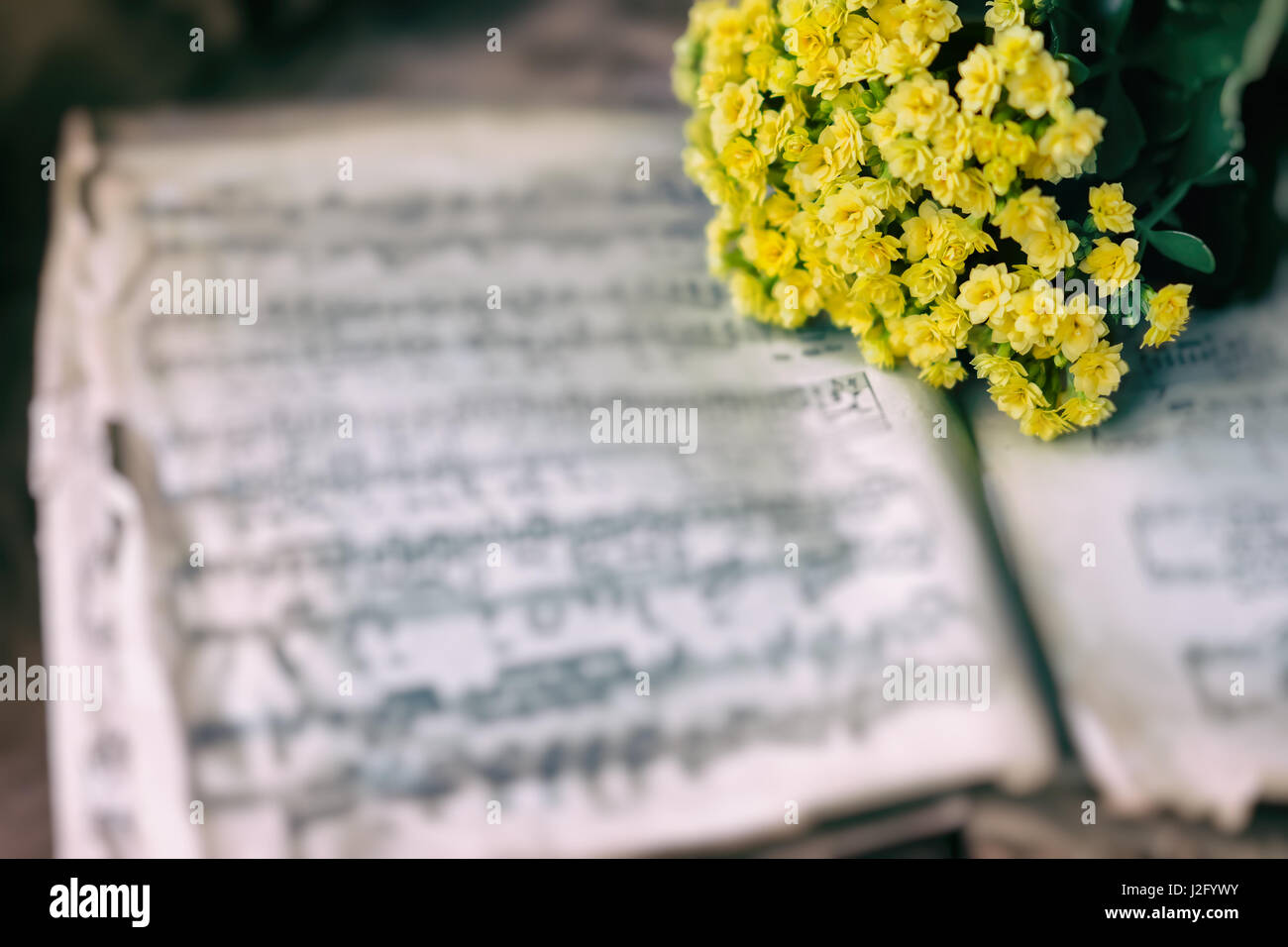 Abstract vintage music background yellow flowers on yellowed old music book with worn paper. Concept of romantic - Stock Image