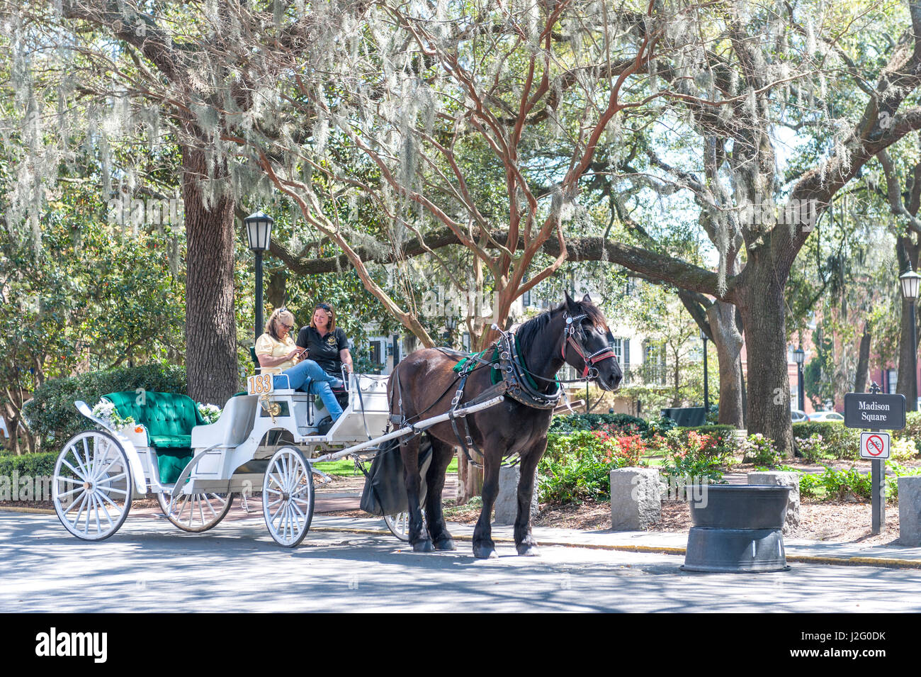 Savannah Georgia Horse Stock Photos Savannah Georgia Horse Stock