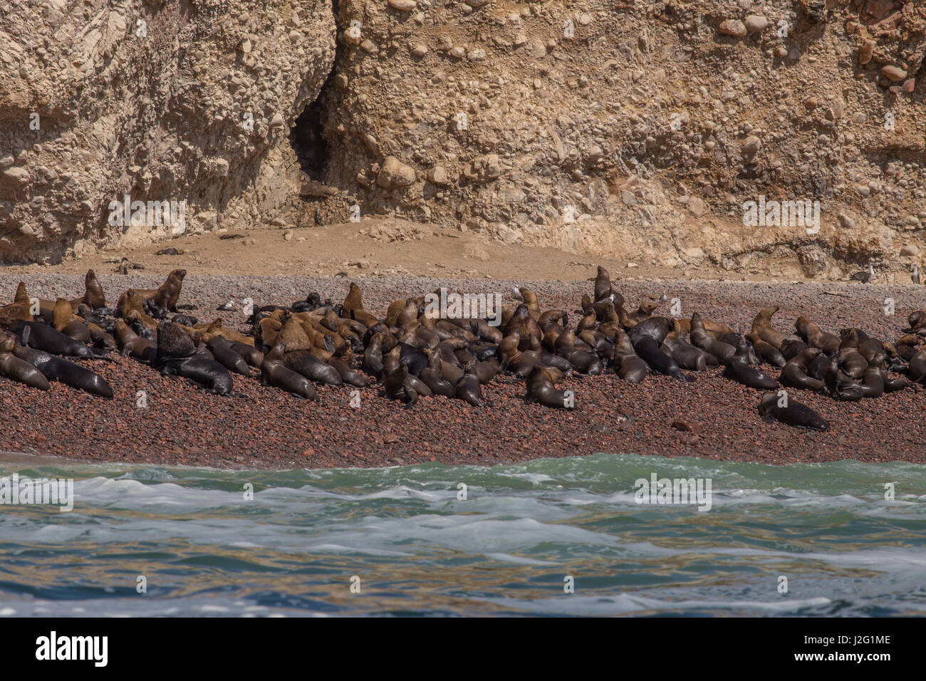 Sea lions on the Ballestas Islands (Islas Ballestas) in the Paracas National Reserve in Peru, South America - Stock Image
