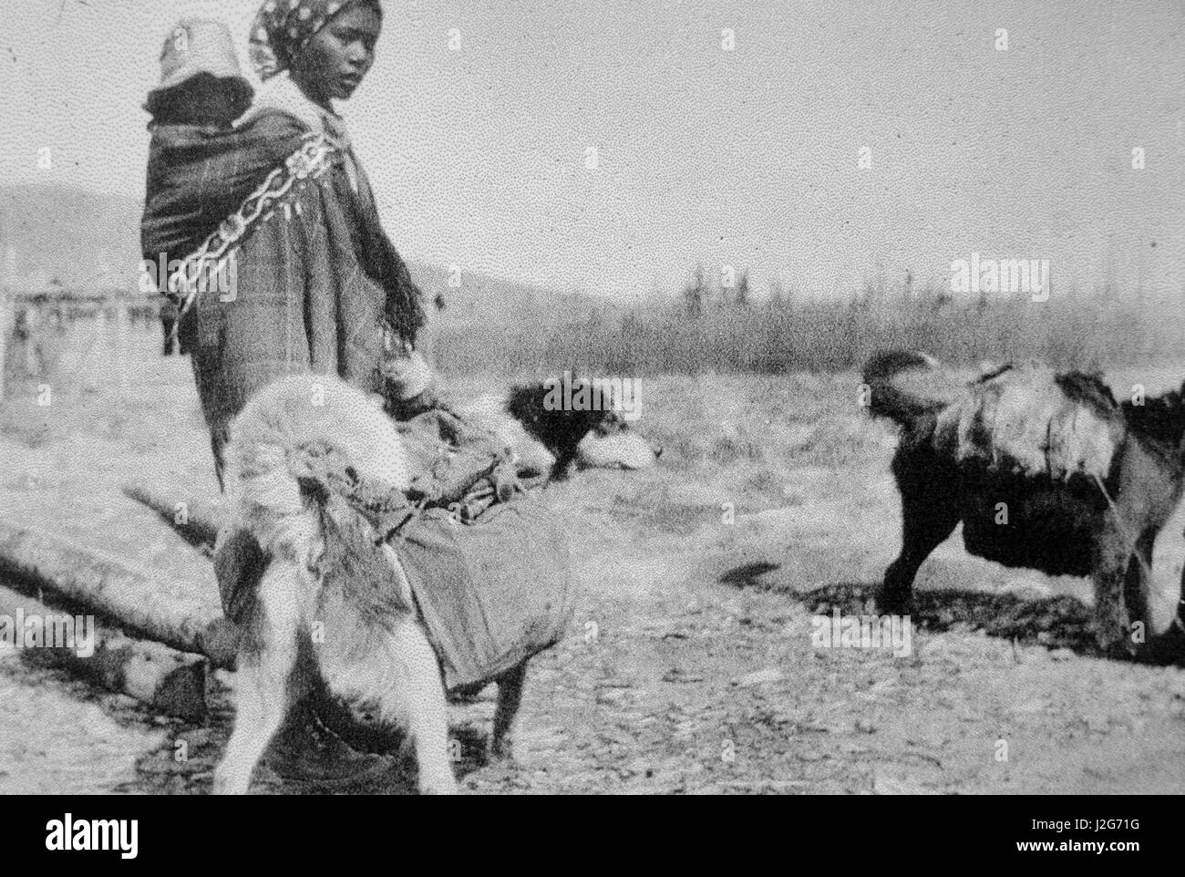 Historic black and white photograph of an Athabaskan woman with baby on back and two sled dogs carrying packs on - Stock Image