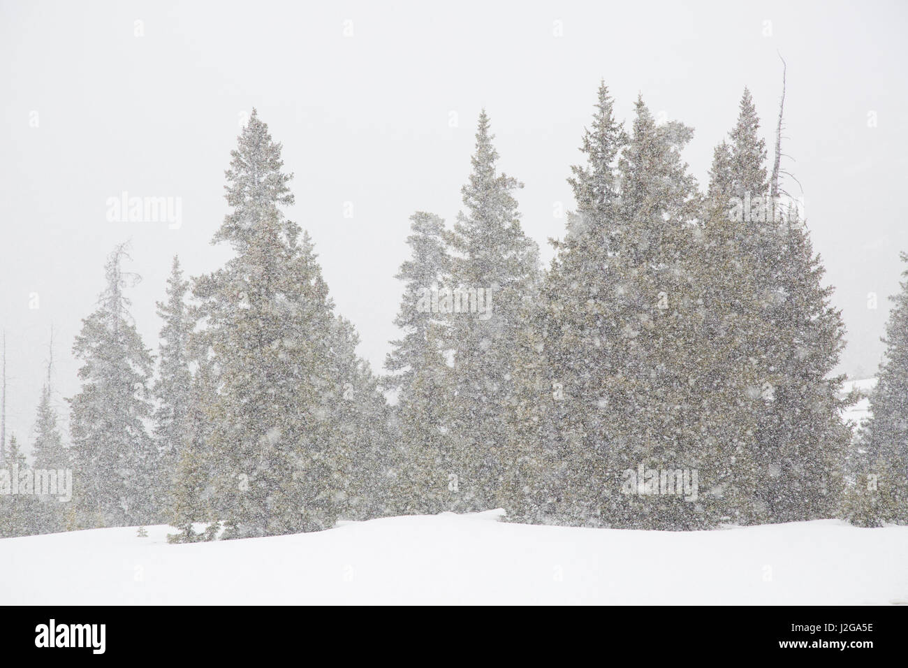 USA, Colorado. Summer snowstorm on Continental Divide. Credit as: Don Grall / Jaynes Gallery / DanitaDelimont.com - Stock Image