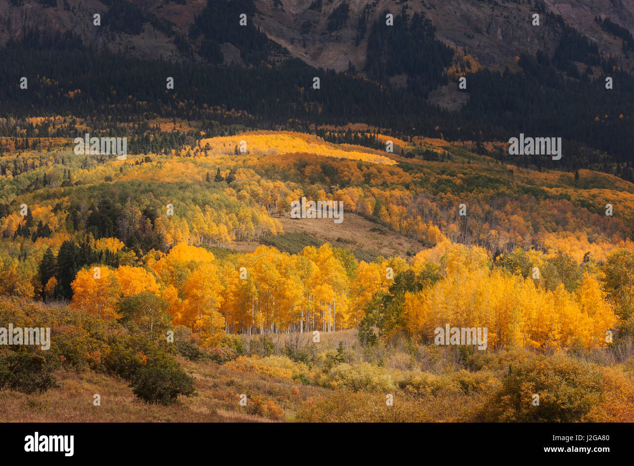 USA, Colorado, Uncompahgre National Forest. Mountain forest landscape. Credit as: Don Grall / Jaynes Gallery / DanitaDelimont.com - Stock Image