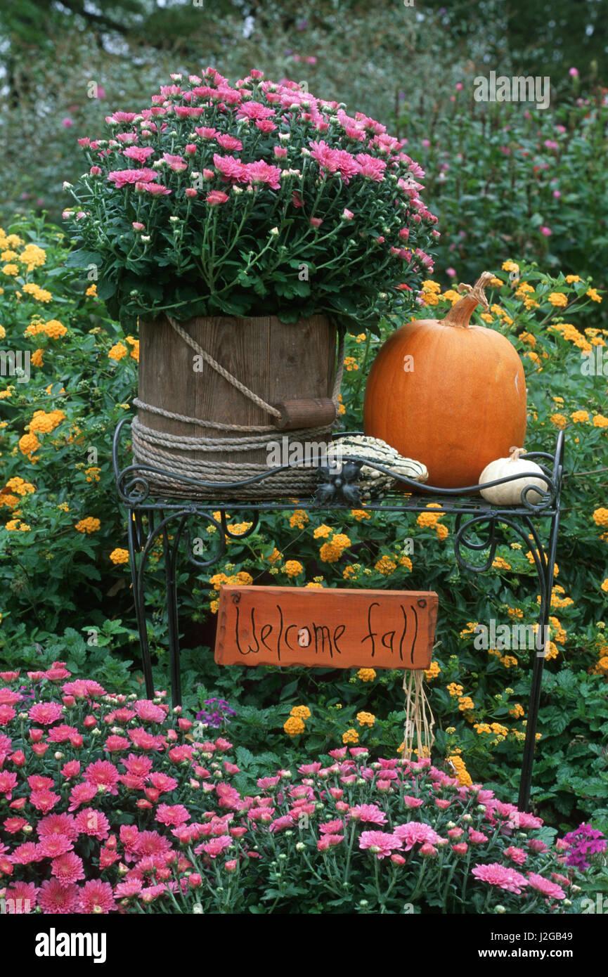 Fall Garden Display Mums In Wooden Bucket Pumpkins Gourds Lantana Stock Photo Alamy