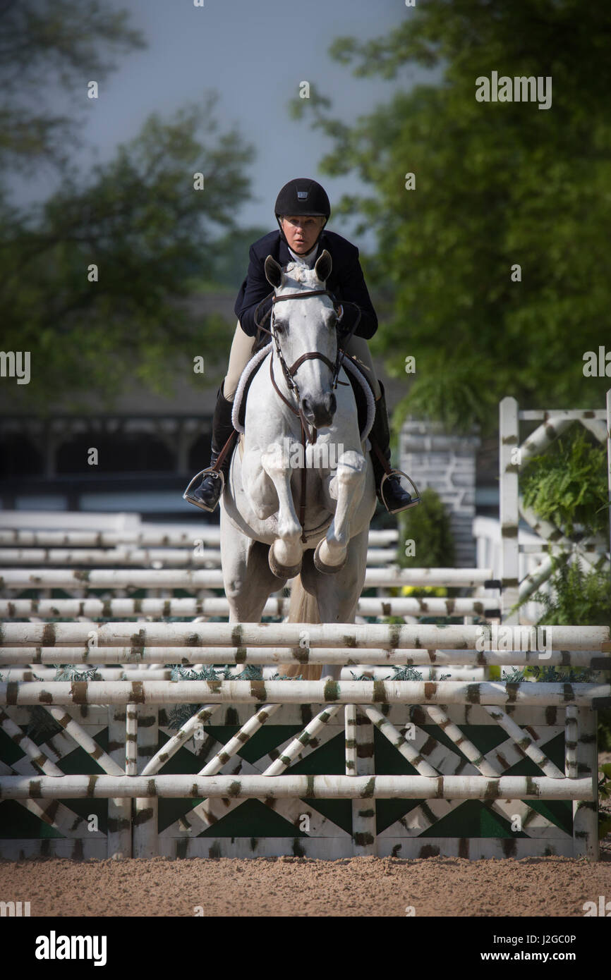 USA, Kentucky, Lexington. Horse and rider jump fence. Credit as: Don Grall / Jaynes Gallery / DanitaDelimont.com - Stock Image