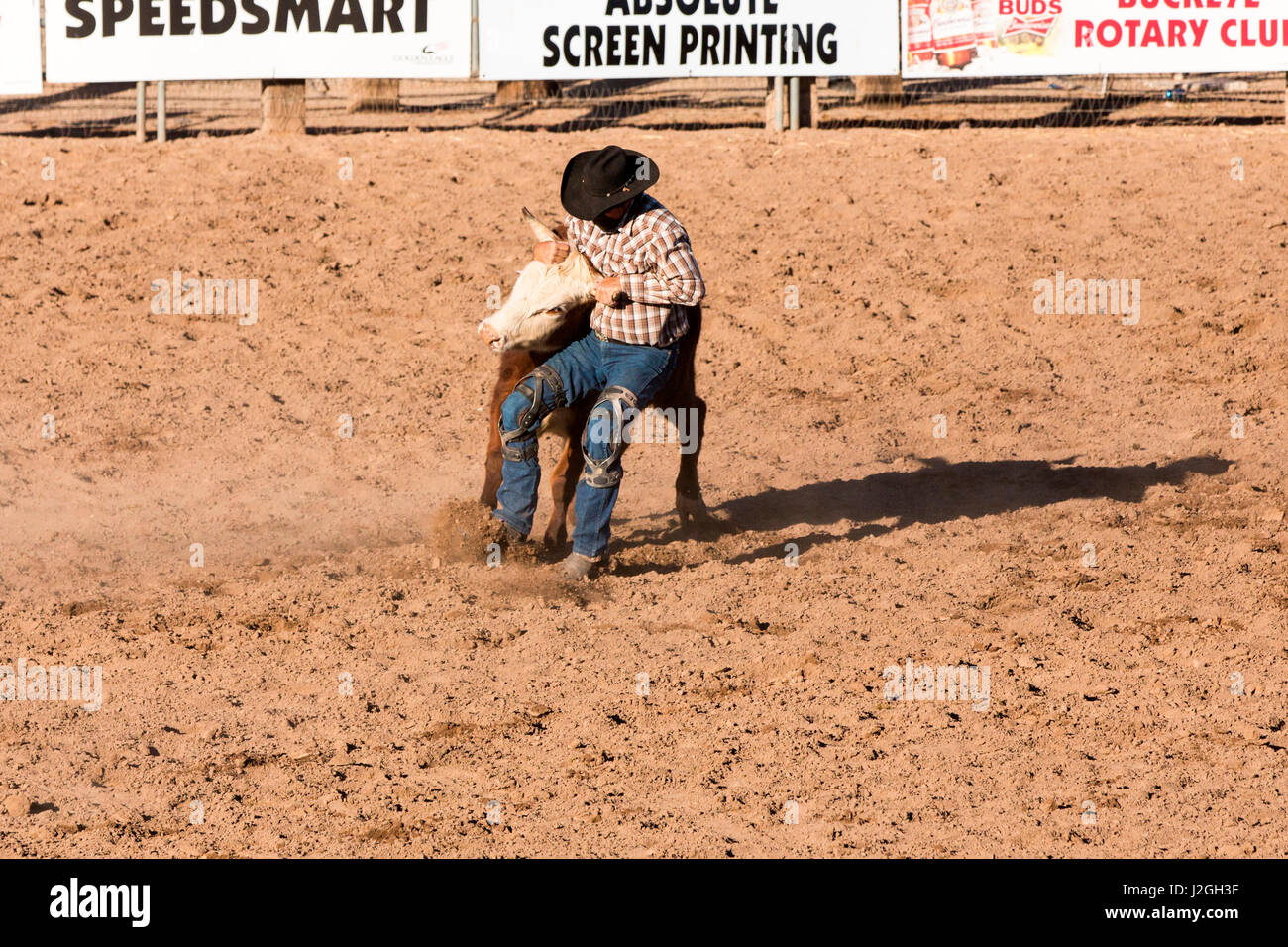 Steer Wrestler Stock Photos Amp Steer Wrestler Stock Images