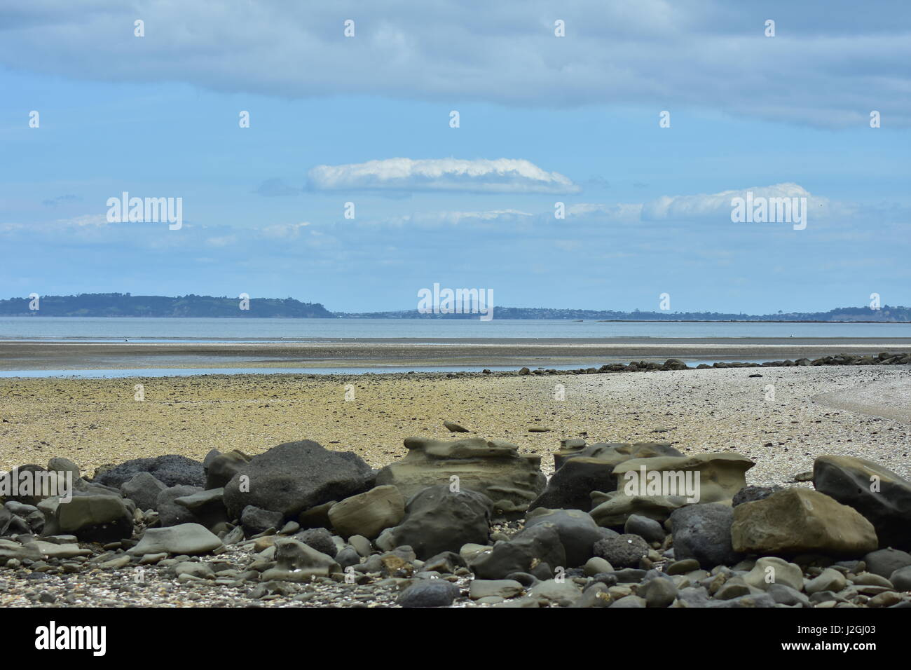 Flat sandy ocean beach with plenty of bivalve shells and eroded rocks on sand and Whangaparaoa Peninsula and Rangitoto - Stock Image