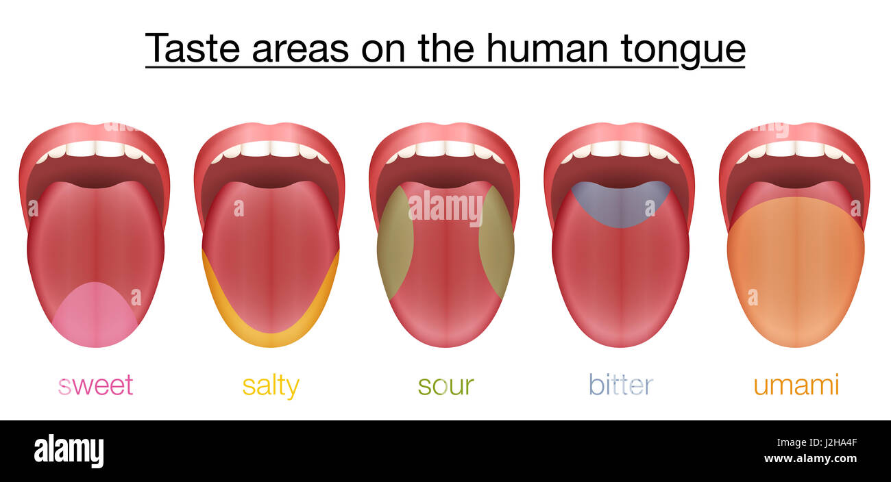 taste areas of the human tongue sweet salty sour bitter and stock photo 139293407 alamy. Black Bedroom Furniture Sets. Home Design Ideas