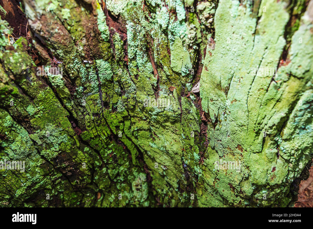 Decomposing tree stock photos decomposing tree stock for What is a tree trunk covered with 4 letters
