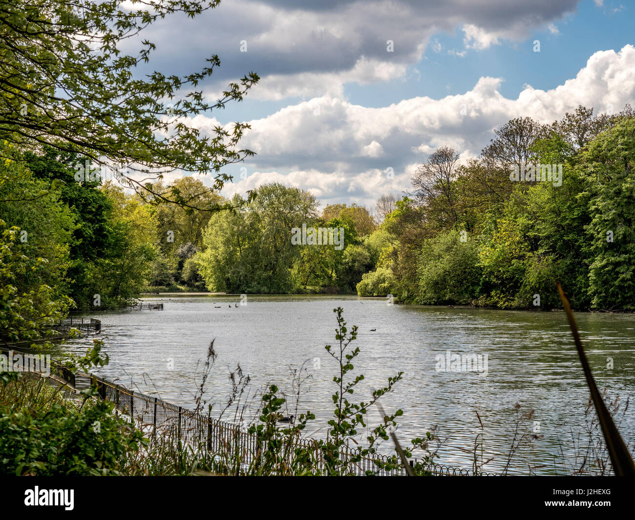 Battersea Park in the Borough of Wandsworth, South bank of the River Thames, London, UK. - Stock Image