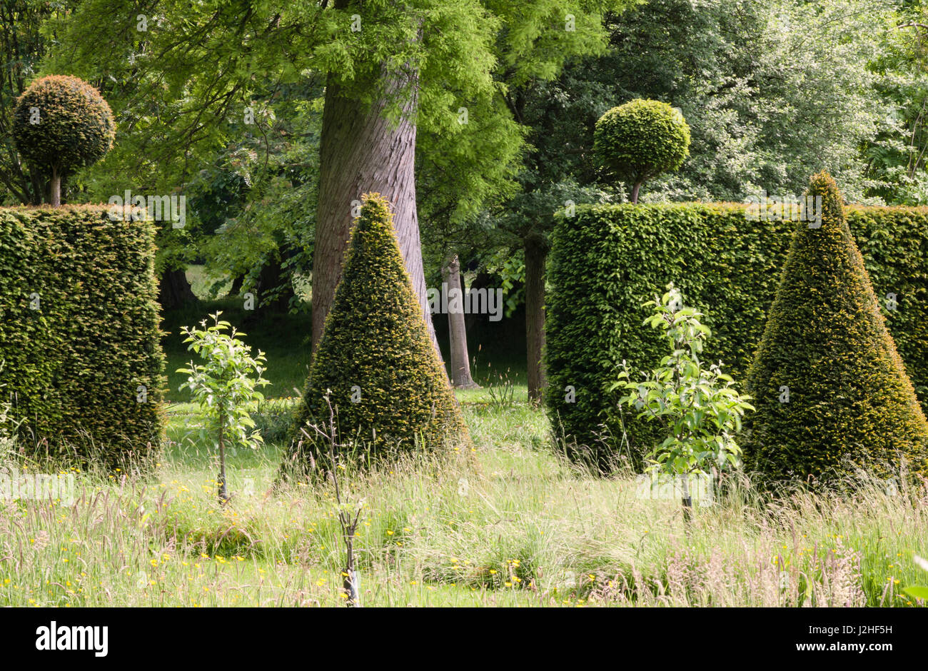 Erddig Hall gardens, Wrexham, Wales, UK. Clipped yew topiary in the restored garden - Stock Image