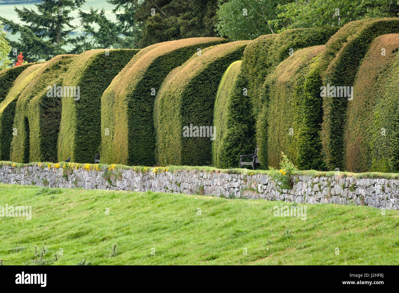 Chirk Castle gardens, Wrexham, Wales, UK. The yew hedges were planted by William Emes from 1761 - Stock Image