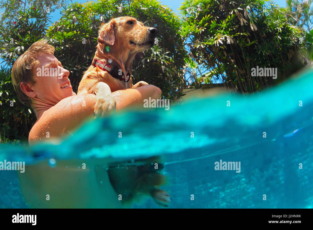 Young man play with fun and train golden labrador retriever puppy in swimming pool - jump and dive underwater. Funny - Stock Image