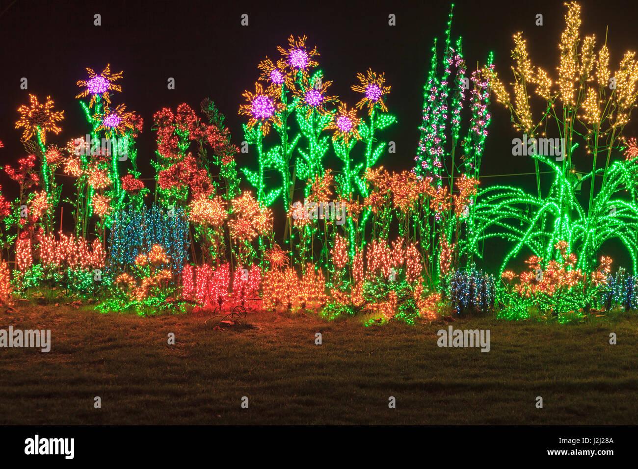 festival of lights bellevue botanical garden bellevue wa usa stock image - Bellevue Christmas Lights