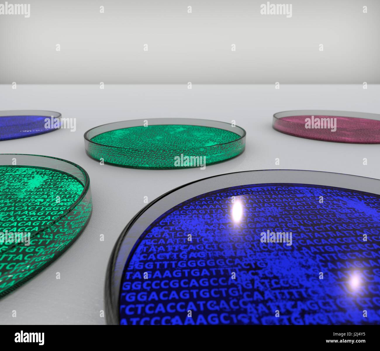 Conceptual image of cultures in petri dishes containing genetic material. Computer artwork. - Stock Image
