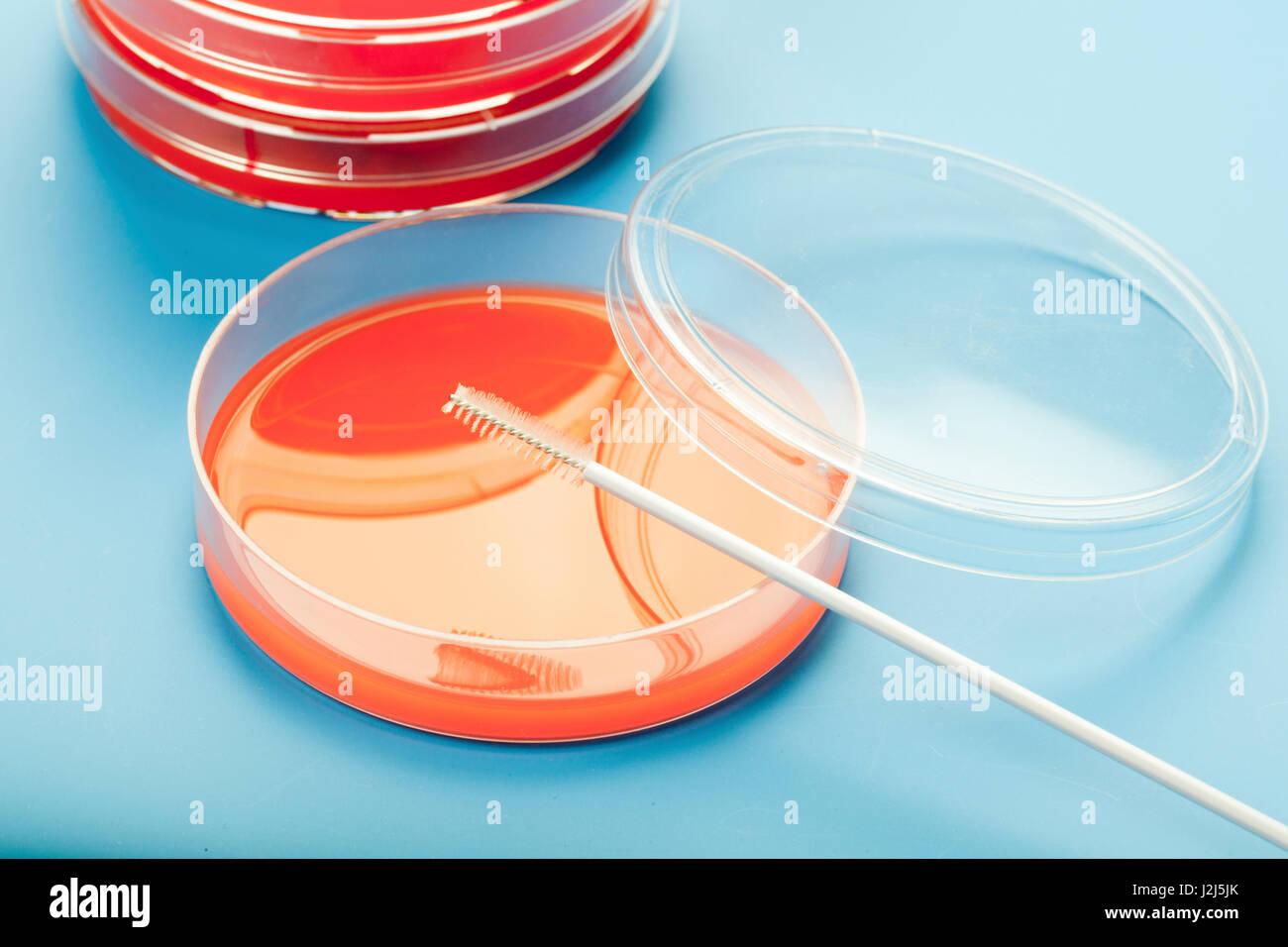 Petri dishes against blue background. - Stock Image